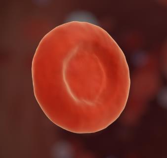 Alyuvar Hücresi