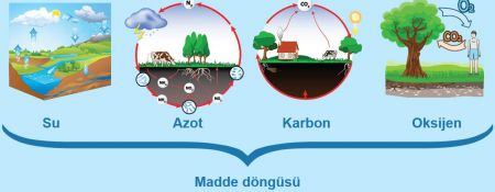 Madde Döngüleri (Su-Azot-Karbon-Oksijen Döngüsü)