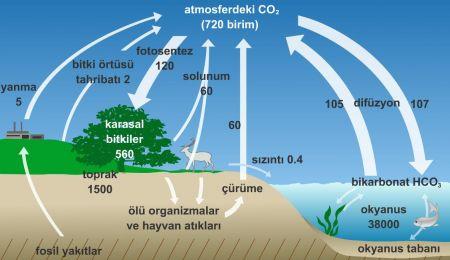 Madde Döngüleri - Karbon Döngüsü