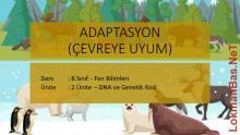 Bölüm 4: Adaptasyon (Çevreye Uyum) Ders Notu- Konu Özeti 2