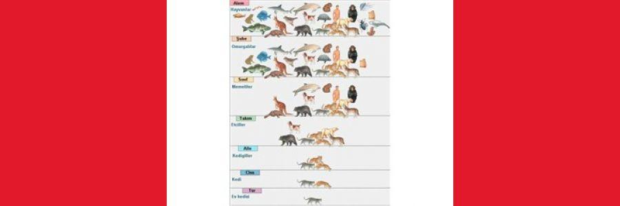 Canlıların Sınıflandırılması Poster Çalışması - Proje Ödevi
